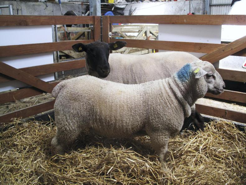 Sheep Prices  Base Prices At An Average Of  U20ac5 70  Kg 08